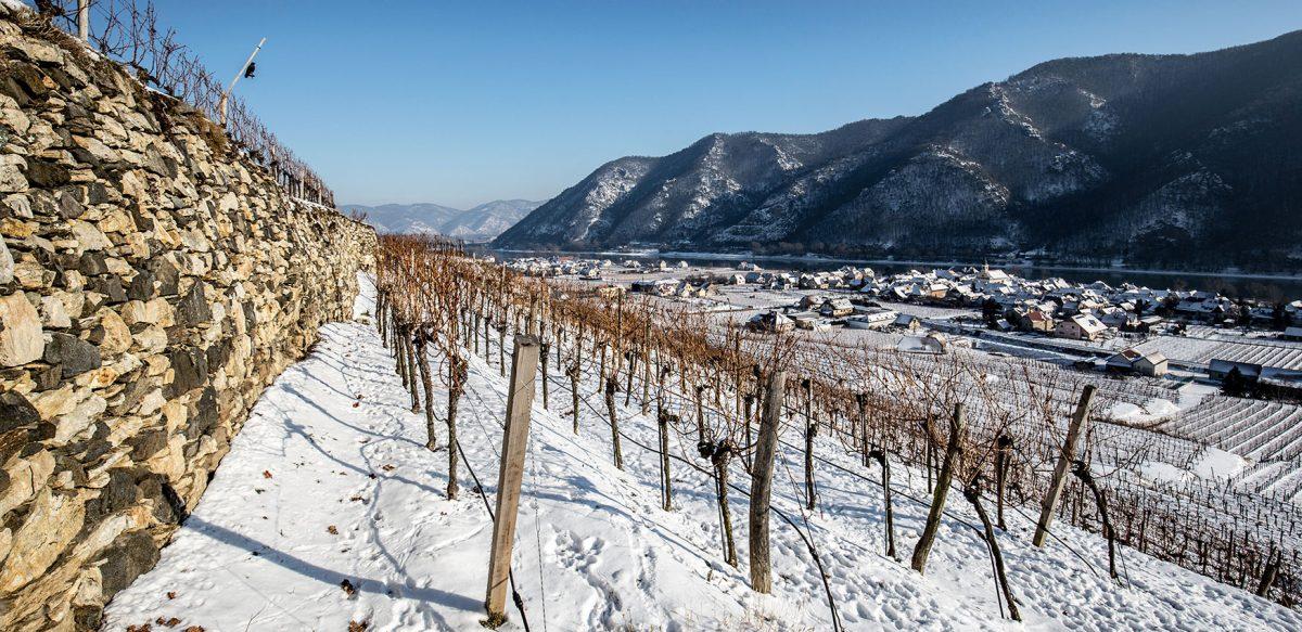 Weingut Rudi Pichler Kollmütz Winter