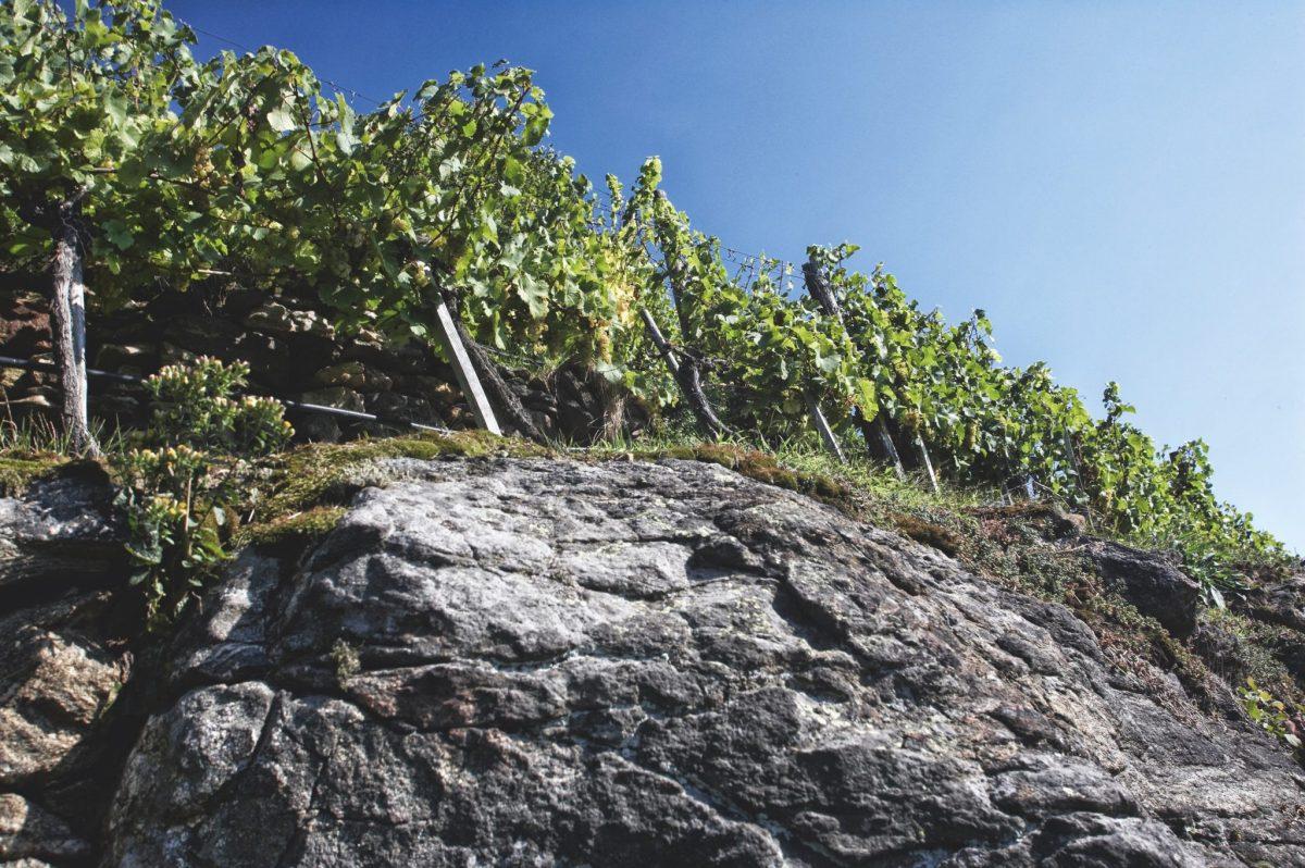 Weingut Rudi Pichler Geologie